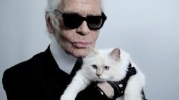 Фото: Наследница Лагерфельда кошка Шупетт «втрауре» поумершему хозяину
