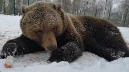 Медведи ибабочки проснулись врегионах Сибири из-за ранней весны— видео