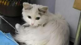 Видео: Кошка проехала более ста километров под капотом иосталась жива