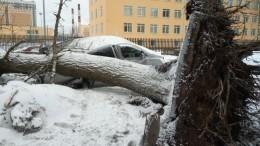 Последствия непогоды: Как Петербург пережил буйство стихии— фотоотчет
