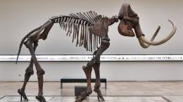 Ученые придумали, как воскресить мамонта— репортаж