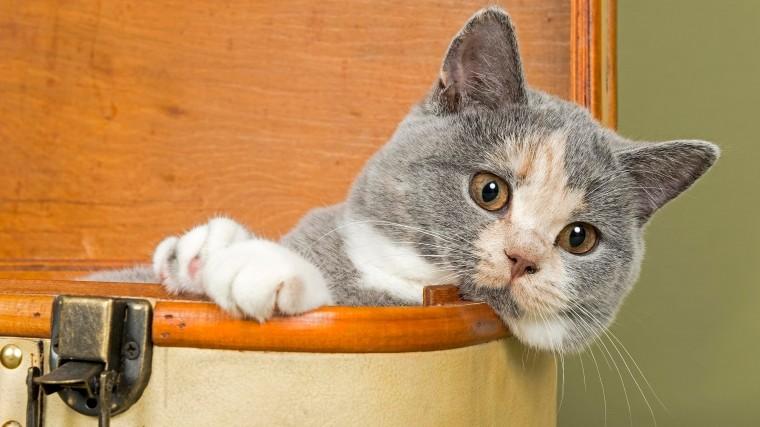 Видео: Как отучить кота точить когти омебель