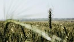 Глобальное потепление наносит удар: ЮгУкраины иРоссии вопасности