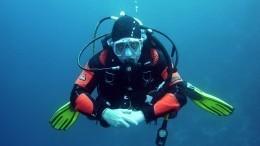 Водолаз вокеанариуме: как перестать бояться акул инаучиться ихдрессировке
