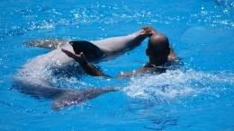 Научное сообщество выступило против дельфинотерапии— видео