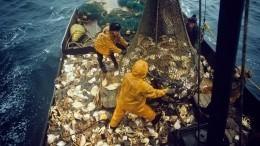 «Наабордаж!»: Вроссийских территориальных водах поймали китайских браконьеров