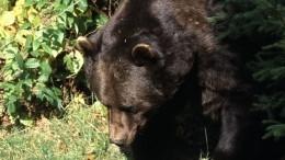 Медведи вклетке— удачный рекламный ход или неоправданная жестокость?