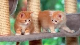 Ученые объяснили, почему кошки откликаются насвое имя