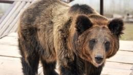 «Как впоследний раз»: китайская медведица «взорвала» соцсети страстным танцем