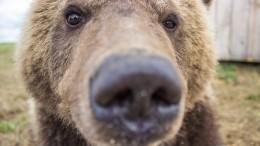 Видео: Двое мужчин «выгуляли» медведя вспальном районе Саратова