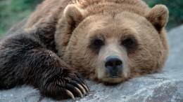 Видео: Кадры зажигательного танца медведя изКитая покоряют сеть