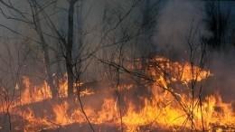 ВМагаданской области ктушению лесных пожаров подключилась авиация