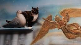 Жесты, котики иживопись: Впетербургском котокафе открылась выставка