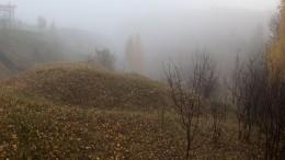 ВЛенинградской области желающим начнут раздавать землю