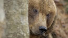 Медведь взобрался надерево вцентре города вОренбургской области— видео