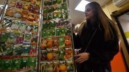 Вместо моркови баклажаны: 80% семян нароссийском рынке оказались подделкой