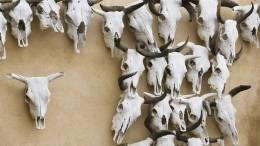 Ядовитый скотомогильник обнаружили под Новосибирском— видео