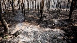 Как Забайкальский край борется сохватившими регион пожарами— репортаж сместа