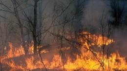 Пожары вЗабайкалье нанесли серьезный урон животноводам края