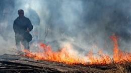 Видео: Более четырех тысяч коров, овец илошадей погибли впожарах вЗабайкалье