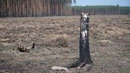 Видео: СКвозбудил уголовные дела охалатности из-за пожаров вЗабайкалье