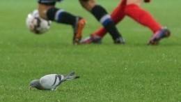 Видео: Футболист «Шинника» сбил мячом пролетавшего над полем голубя