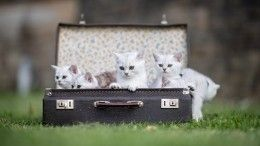 Что делать, если вынашли потерявшегося котенка или щенка?