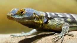 Страшная схватка: Ящерица отчаянно борется свцепившейся внее коброй