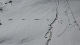 Индийские военные сообщили обобнаружении следов йети— фото