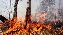 Лес вогне: Природные пожары продолжают захватывать все новые территории