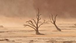 Видео: Мощная песчаная буря накрыла юго-восток Австралии
