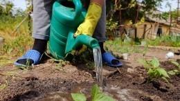 Лайфхак: Как привести огород впорядок спомощью камней— видео