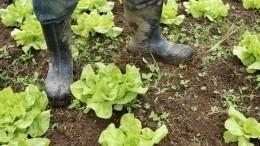 «Экологично!»— вСША узаконили удобрение земли мертвецами