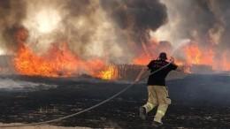 Сильный пожар охватил леса западной части Иерусалима— кадры сместа