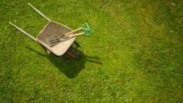 Видео: как насамом деле выращивают рулонный газон
