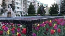 Тюремные условия: вКрасноярске клумбы закрыли решеткой