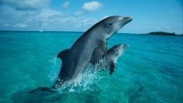 23июля— Всемирный день китов идельфинов