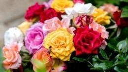 Лайфхак: Как вырастить розу изчеренка— видео