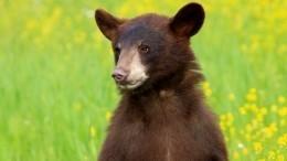 Видео: Смелый иловкий медведь повис надереве вПриморье