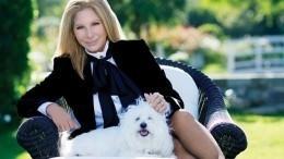 «Жуть какая»: Барбара Стрейзанд сводила клонированных собак намогилу ихматери