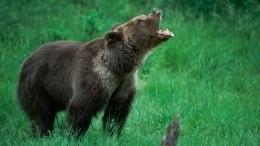 Нестандартное решение: тувинец откусил часть языка атаковавшего его медведя