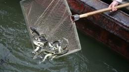 Рыбные кладбища: Почему Волга награни экологической катастрофы