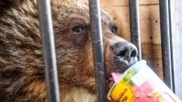 Учитель биологии 20 лет спасает вКалуге диких животных