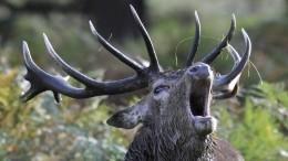 Обезумевшие олени! Озвучена новая версия гибели группы Дятлова