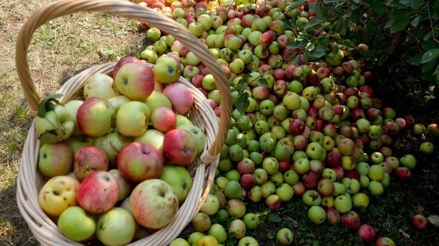 Преображение Господне или Яблочный спас: традиции исмысл праздника