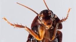 Они возвращаются. Тараканы массово атакуют квартиры— репортаж