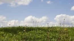 Десять фермеров Петербурга получили «Ленинградский гектар»