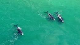 Видео: Япония возобновляет коммерческий китобойный промысел