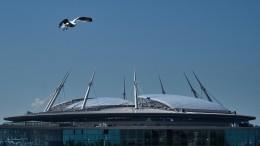 «Плач умирающих бакланов»: «Газпром-Арена» спасается отчаек иворон