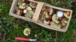 Видео: ВМинсельхозе объяснили предложение регулировать сбор грибов иягод
